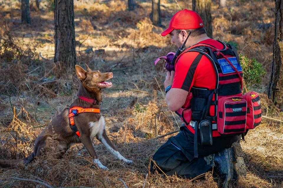 how to become a search and rescue dog handler